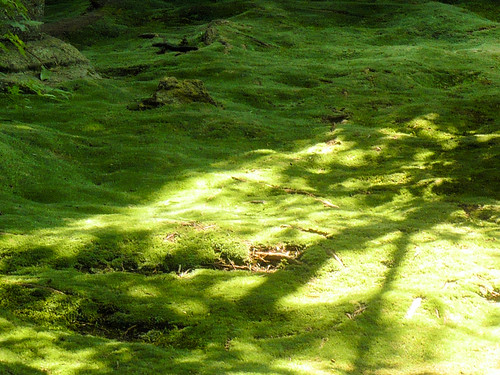 Ryoanji moss garden