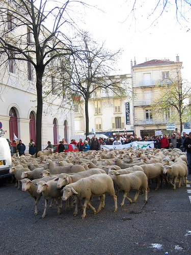 400 sheep start their march through the center of Valence.