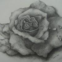 點畫_玫瑰