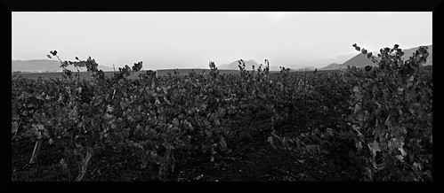 vineyards8edit