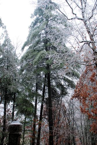 December Ice Storm 2