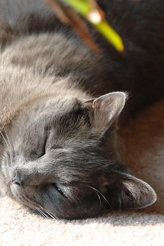 Murphy Resting