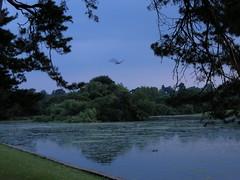 Verulamium Park, St Albans, at dusk
