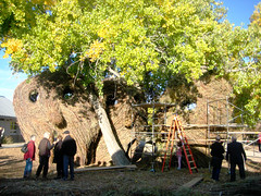patrick dougherty land art 4