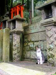 Official cat of Fushimi Inari