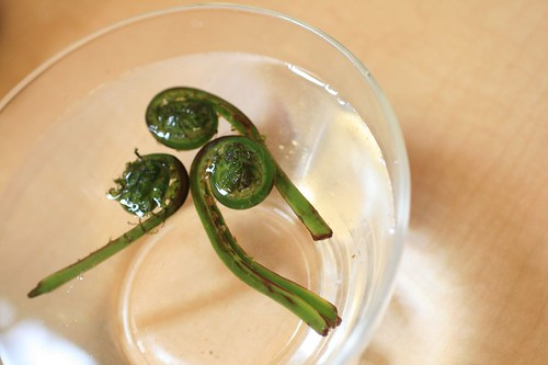 Soaking fiddleheads