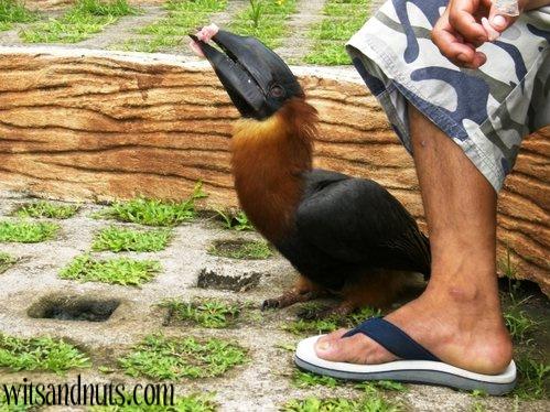 bird being fed