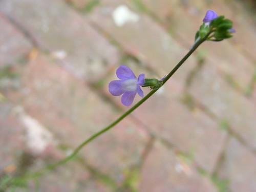 un (une?) autre fleur