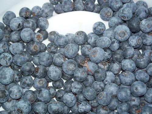 bucket of blueberries