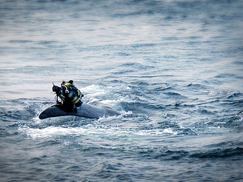 Diver_Whale