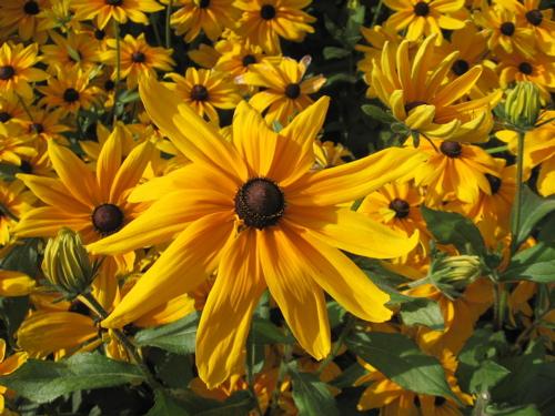 Flowers in a public garden.
