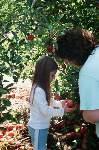 Apple Picking, 2008