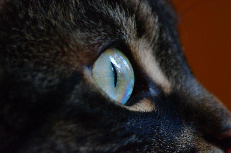 IMGP8801 a Cat Eye