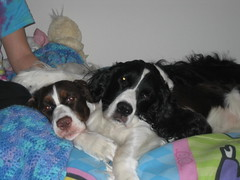 Bella and Domino - Inseparateable