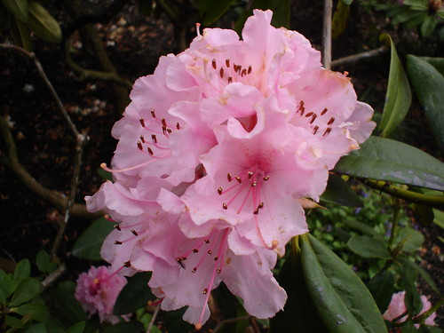 Wknd Apr 5 2008 081