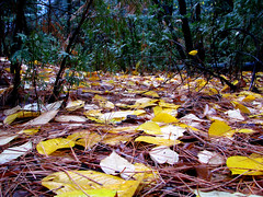 Leaves on a Forest Floor