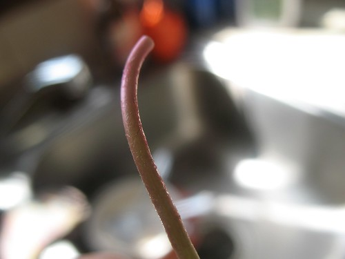straight stem