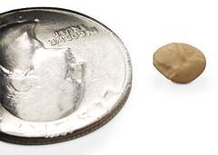 06-lentil-bean