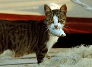 [フリー画像] [動物写真] [哺乳類] [ネコ科] [猫/ネコ] [魚類] [フリー素材]