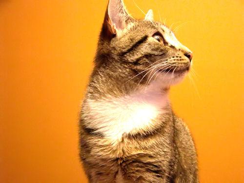 RIP, Kitty