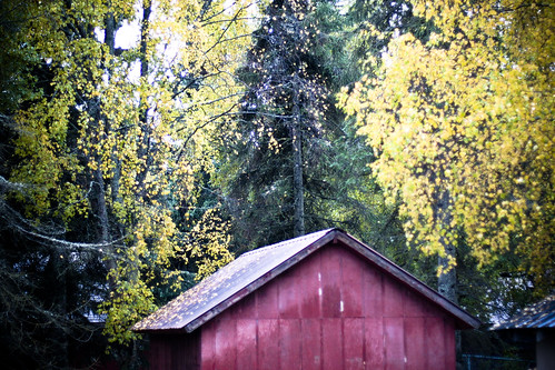red shed (by Leaca's Philosophy)