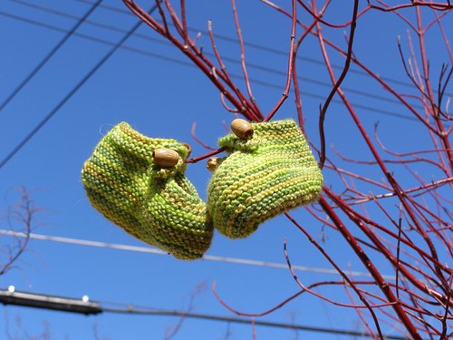 Booties in a tree