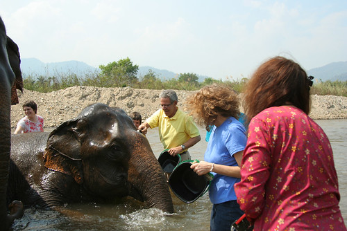Elephant Nature Park 2/08 Chiang Mai Thailand