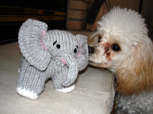 Coco loves Baby Elephant 2-15-2009 12-24-30 PM