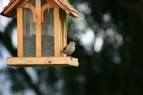 Two-thirds Bird