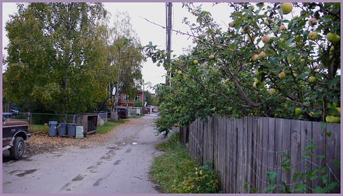 Alley with apples, South Addition.