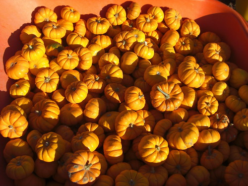 Pumpkin Farm II