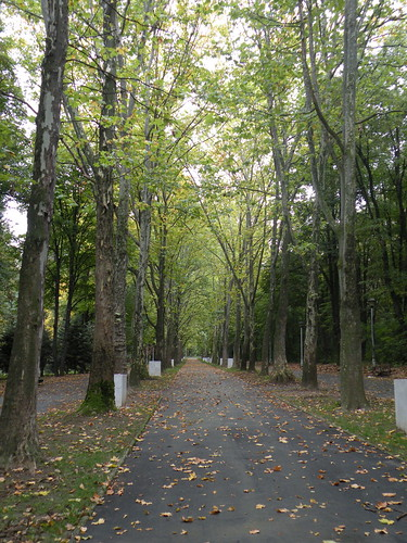 Rows of Plane Trees in Haid Park