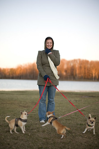 The Wifey and the Chihuahuas