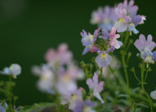 How our garden grows: Annual