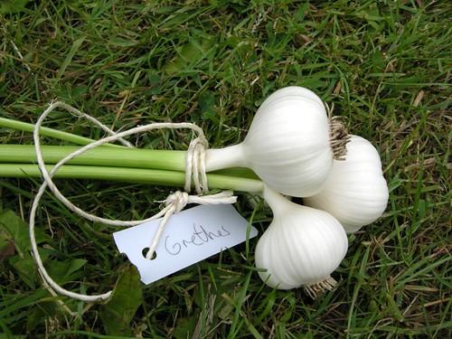 garlic1369