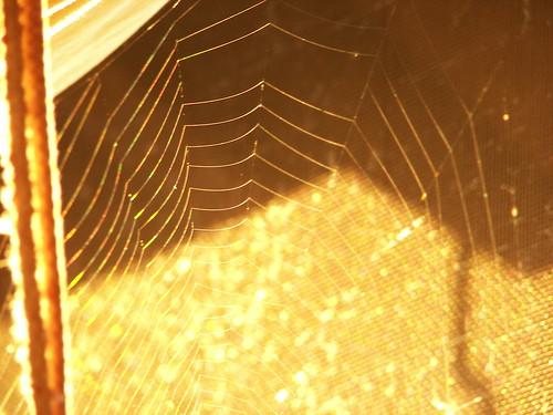 Web, Morning Light
