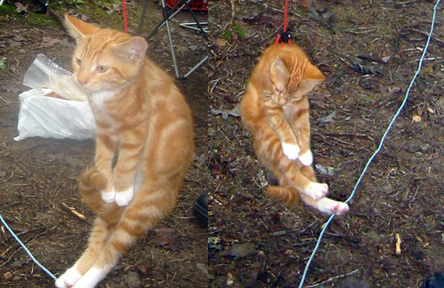 20080927 - camping - 169-6916-diptych-169-6914 - Lemonjello hanging from harness - please click through to leave a comment on FlickR