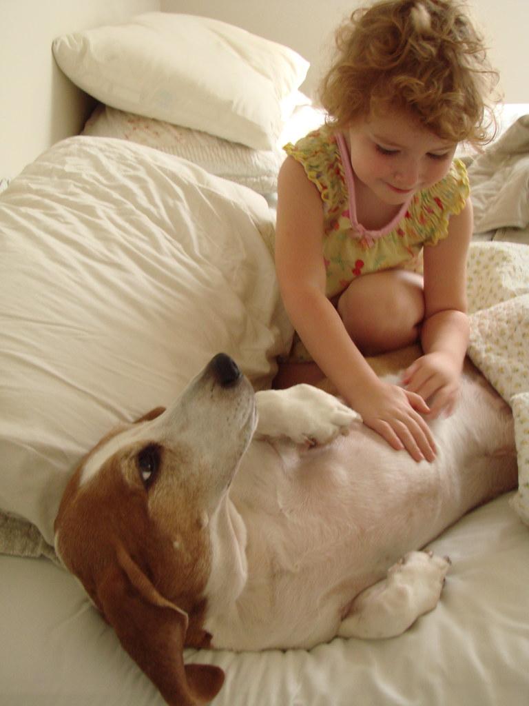 basett hound