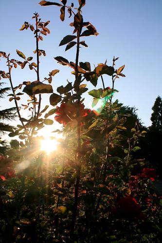 Eugene Rose Garden