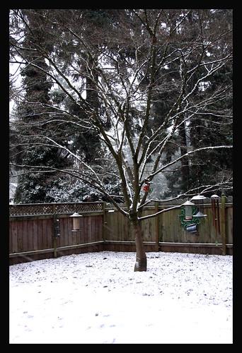 Snow...a rarity in Portland OR