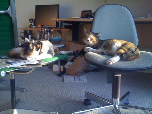 cats2008608