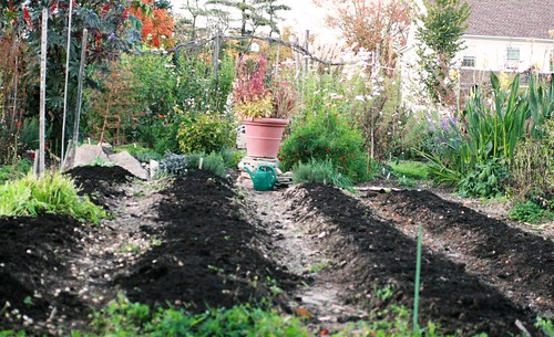 Vegetable beds covered in compost