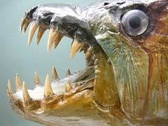 fishy grin