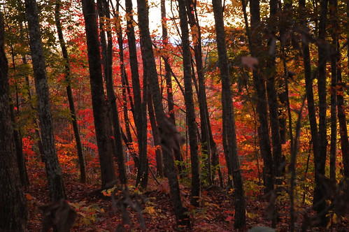 Georgia Fall by Jim Liestman.