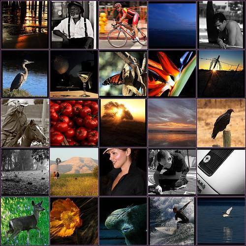 portfolio mosaic