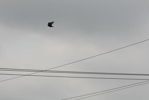 Bird & Wires