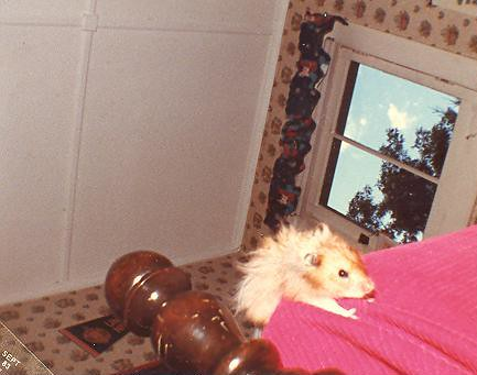 Tory II, the adventure hamster