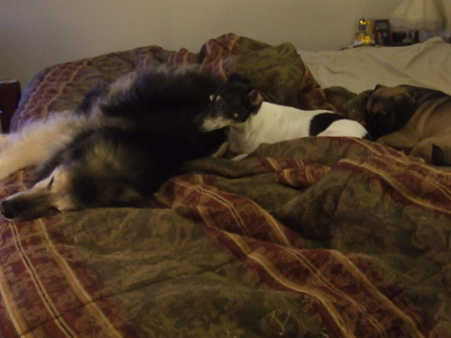 The dogs cuddled together -- after making the bed to suit them.
