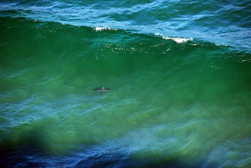 Tiburón visto desde Indian Head