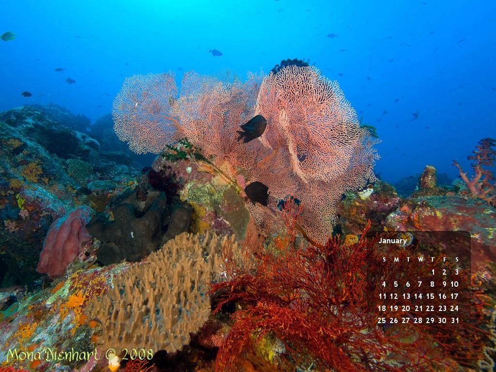 Underwater colours